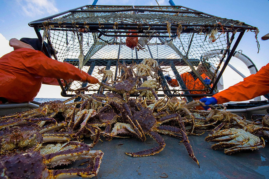 king-crab-phan-thiet